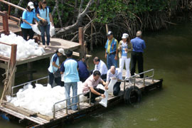 Release of shrimp and sea bass in mangrove area of the local national park